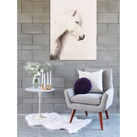 Icelandic Horse Canvas Art Print