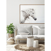 Stallion Canvas Art Print