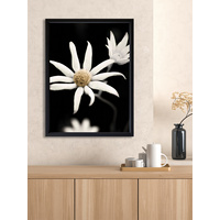 Flannel Flower Poster