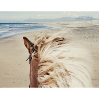 Beach Horse Canvas Art Print