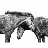 Spotted Horses Art Print