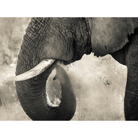 Trunk & Dust Art Print