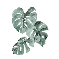 Zulu Monstera