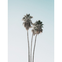 Lone Palms Poster